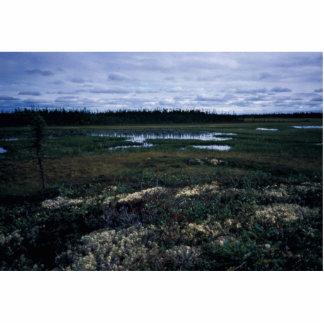 Wetland Landscape Photo Cut Outs