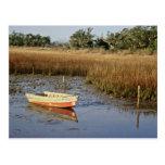 wetland, myrtle, beach, wetland myrtle beach,