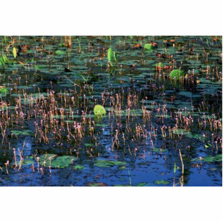 Wetland plants at Okefenokee National Wildlife Ref Cut Outs