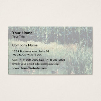 Wetland, Pothole Business Card