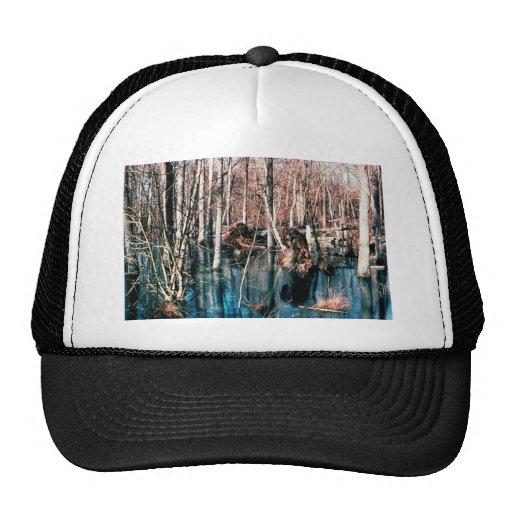 Wetland, Upland Wood Swamp Hat