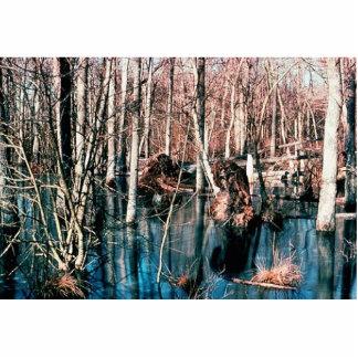 Wetland, Upland Wood Swamp Photo Sculptures