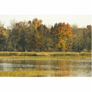 Wetland with autumn trees and ducks photo cut out