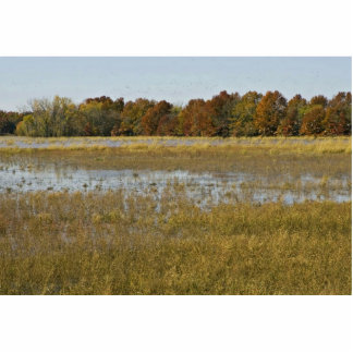 Wetland with autumn trees and ducks rising photo cut out
