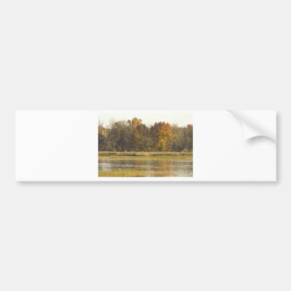 WETLAND WITH AUTUMN TREES IN BACKGROUND AND DUCKS BUMPER STICKER