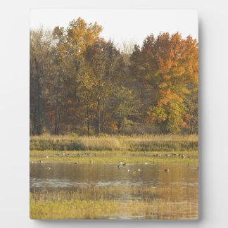 WETLAND WITH AUTUMN TREES IN BACKGROUND AND DUCKS PLAQUE