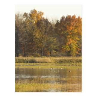 WETLAND WITH AUTUMN TREES IN BACKGROUND AND DUCKS POSTCARD