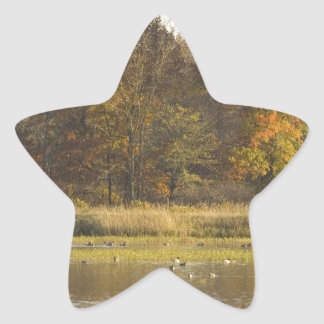 WETLAND WITH AUTUMN TREES IN BACKGROUND AND DUCKS STAR STICKER