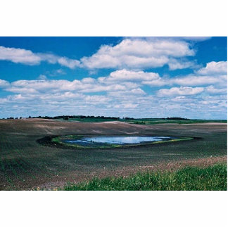 Wetlands, Agricultural Impact Photo Cutouts