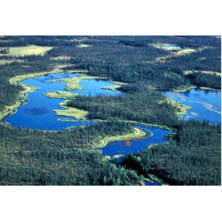 Wetlands and Spruce Forest Cut Outs