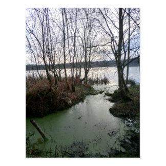 Wetlands Around Blakemere Moss Postcard