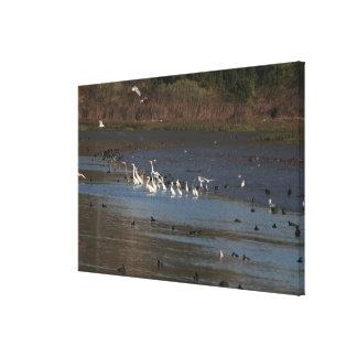 Wetlands Birds Wildlife Animal Photography Canvas Print