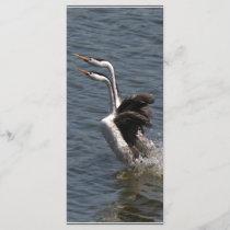 Wetlands Birds Wildlife Animals Photography
