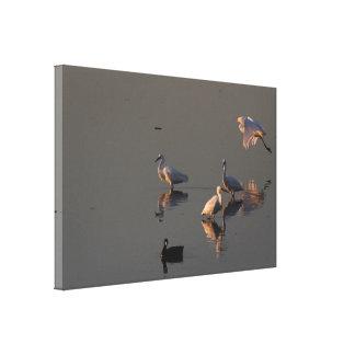 Wetlands Birds Wildlife Animals Photography Canvas Print