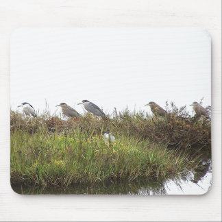 Wetlands Birds Wildlife Animals Photography Mouse Pad
