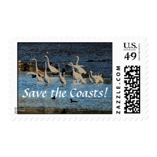 Wetlands Birds Wildlife Animals Photography Postage