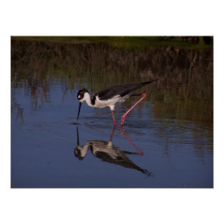 Wetlands Birds Wildlife Animals Photography Poster