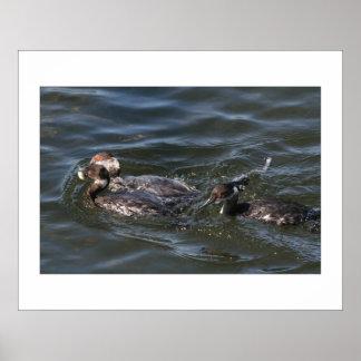 Wetlands Birds Wildlife Animals Photography Poster