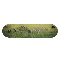 Wetlands Birds Wildlife Animals Photography Skateboard