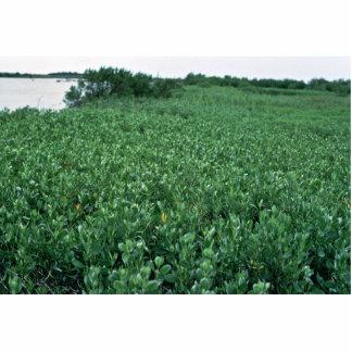 Wetlands, Black Mangrove Swamp Photo Cut Outs