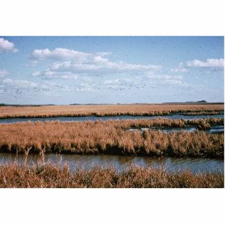 Wetlands, Blackwater National Wildlife Refuge Photo Cutout