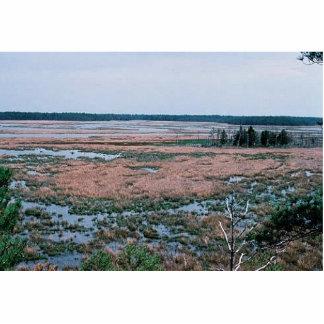 Wetlands, Blackwater National Wildlife Refuge Photo Cutouts