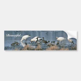Wetlands, Bombay Hook National Wildlife Refuge Bumper Sticker