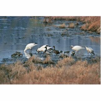 Wetlands, Bombay Hook National Wildlife Refuge Photo Cut Outs