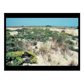 Wetlands. Delaware Bay Cape Henlopen Postcard
