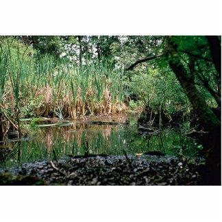 Wetlands, Delaware Photo Sculptures
