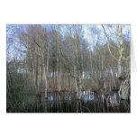 Wetlands in Delamere Forest Greeting Cards