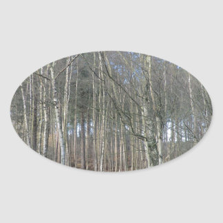 Wetlands in Delamere Forest Oval Sticker