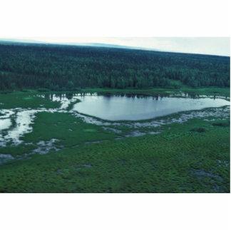 Wetlands in Innoko Refuge Acrylic Cut Out