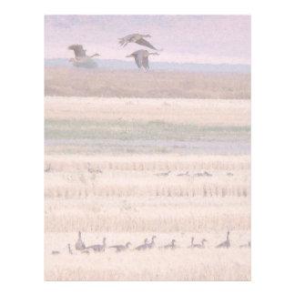 Wetlands Migration Letterhead