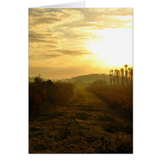 Wetlands Morning Greeting Cards