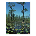 Wetlands, Okefenokee National Wildlife Refuge Postcards