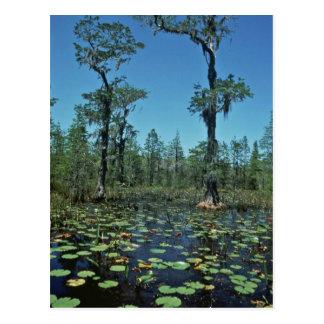 Wetlands, Okefenokee National Wildlife Refuge Postcard