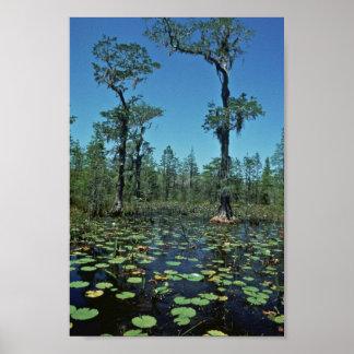 Wetlands, Okefenokee National Wildlife Refuge Poster