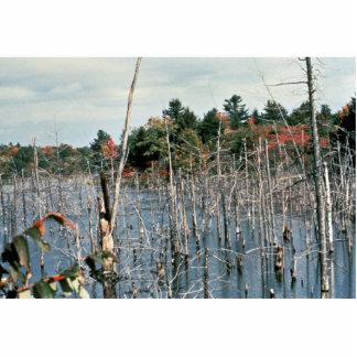 Wetlands Photo Sculpture