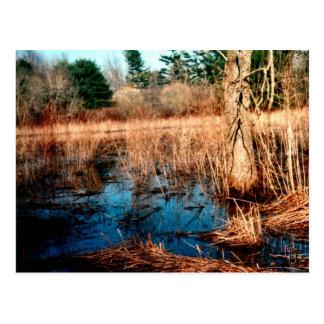 Wetlands Postcard