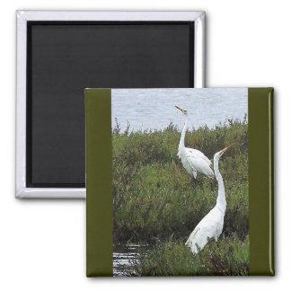 Wetlands Spring Egrets Magnet