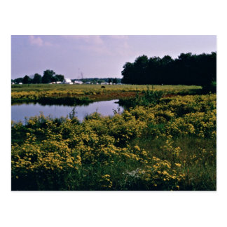 Wetlands Upper Choptank River Delaware Post Cards
