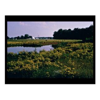 Wetlands Upper Choptank River Delaware Postcard