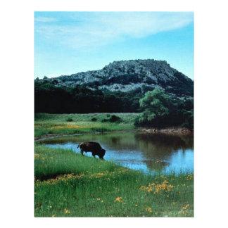 Wetlands with Buffalo Flyer
