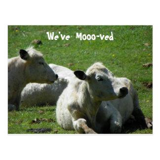 We've Mooo-ved  Post card