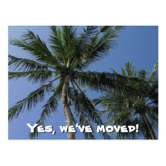 We've moved - Palm Trees on Postcard