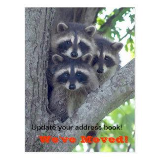 We've Moved Postcard (Raccoons in tree)