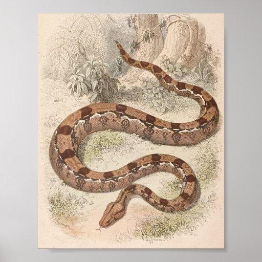 WH Freeman - cartera del constrictor de boa Póster