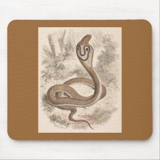 WH Freeman - Cobra Di Capello Mouse Pad