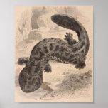 WH Freeman - el gran Salamander japonés P/folio Impresiones
